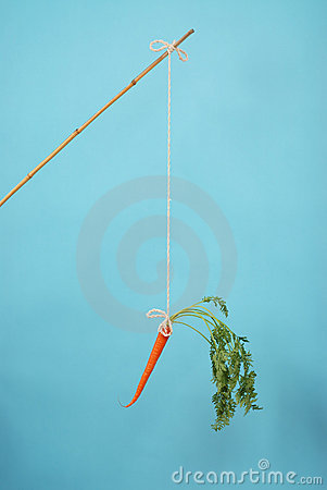 Carrot on a stick on blue