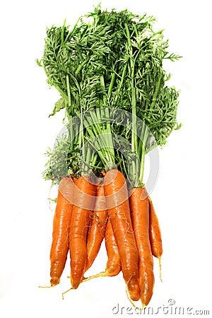 Free Carrots Stock Image - 5665041