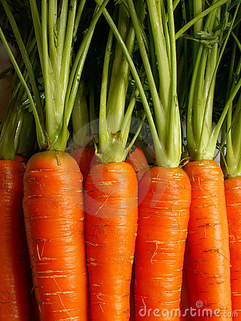 Free Carrots Stock Images - 619084