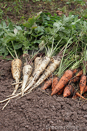 Free Carrots And Parsnip Stock Photography - 11209282