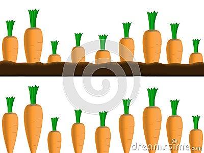 Carrots borders