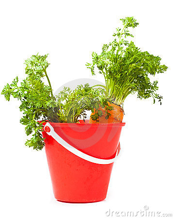 Carrots in the bucket