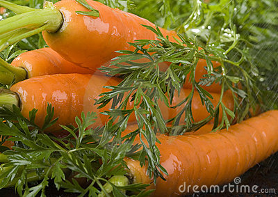 The carrots & rain