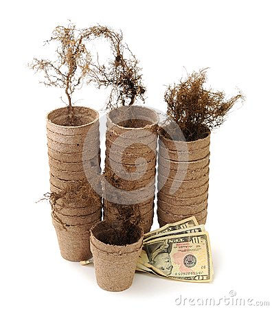 Carton vase, root and money