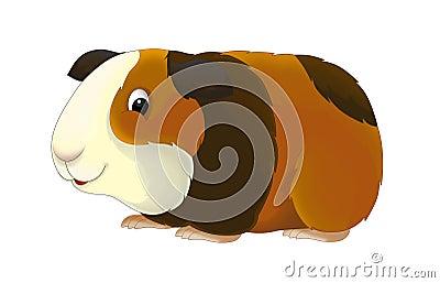 Clip Art Guinea Pig Clip Art guinea pig stock illustrations 342 vectors clipart dreamstime