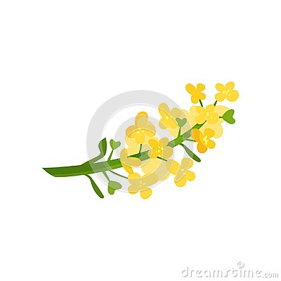 Free Cartoon Illustration Of Small Yellow Flowers On Green Stalk. Wild Blooming Herb. Floral Or Botanical Theme. Flat Vector Stock Images - 110354634