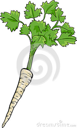Parsley root vegetable cartoon illustration