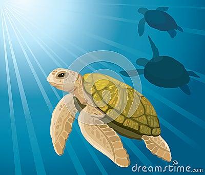 Cartoon turtles and sea