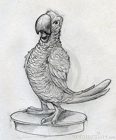 Cartoonish parrot sketch