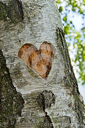 Carved heart in tree
