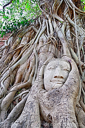 Carved tree sculpture