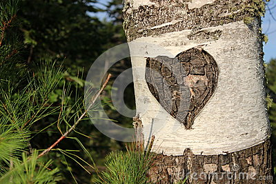 Carvings On A Birch Tree Royalty Free Stock Photos - Image: 26108548