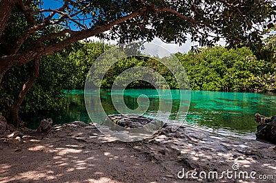 Casa Cenote Mexico Tulum limestone mangrove jungle
