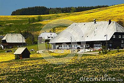 Casa da quinta da floresta preta no prado do verão