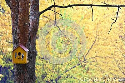 Casa do pássaro na árvore no outono