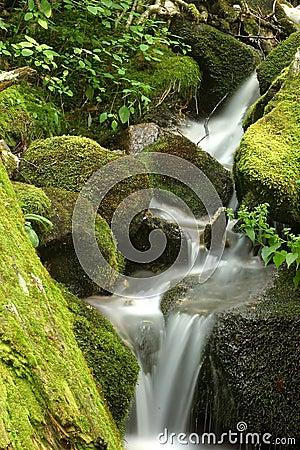 Cascada cubierta de musgo