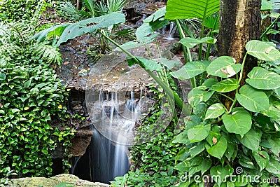 Cascada pacífica de la selva tropical