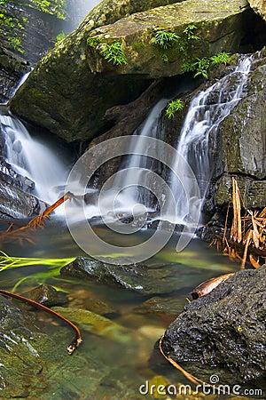Cascadas tropicales