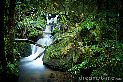 Cascade in black forest