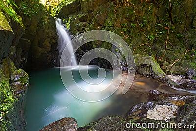 Cascade à écriture ligne par ligne de paradis dans la jungle