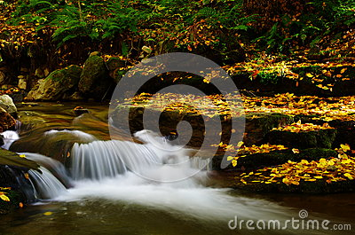 Cascade and fall leaves