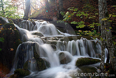 Cascade in the forest