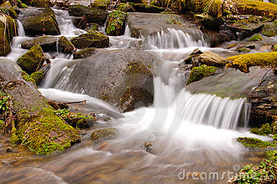 Cascade in the Wilds