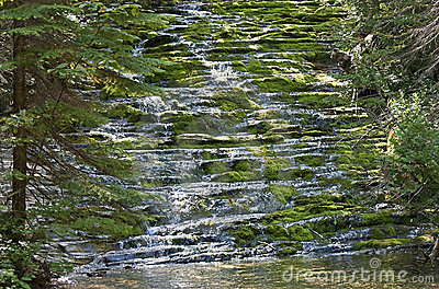 Cascading wilderness brook