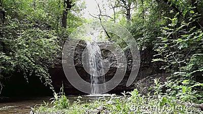 Cascata della foresta della cascata video d archivio