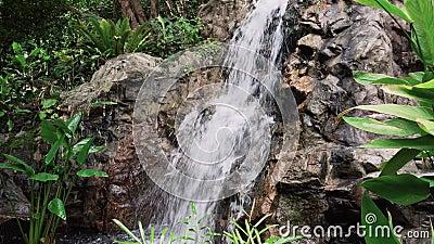 Cascata tropicale della giungla archivi video