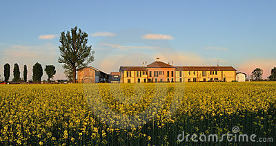 Cascina rural building with field mustard (Brassic