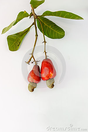 Free Cashew Nut Royalty Free Stock Photography - 40333767
