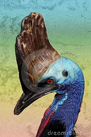 Cassowary птицы таинственный
