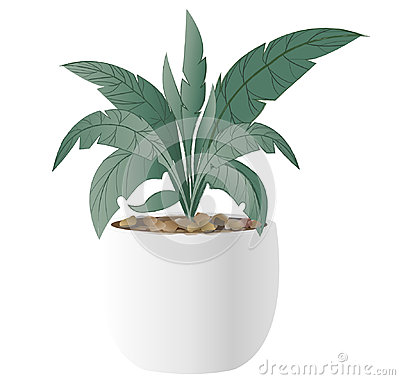 Free Cast-Iron Plant With Pot Royalty Free Stock Image - 97338926