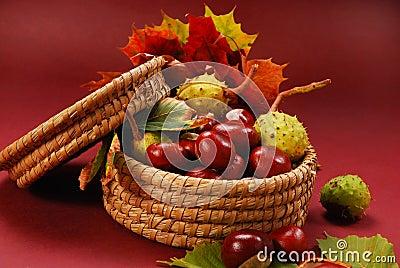 Castañas y hojas del otoño