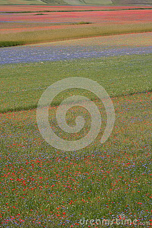 Castelluccio di Norcia / colored fields