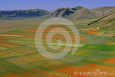 Castelluccio di Norcia / Coloured fields