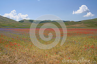 Castelluccio di Norcia / coloured view