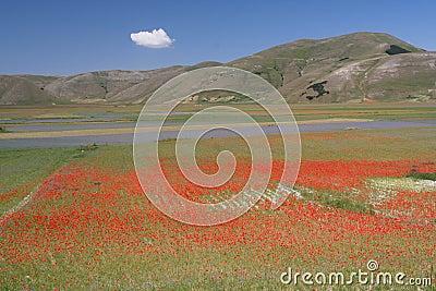 Castelluccio di Norcia / coloured view