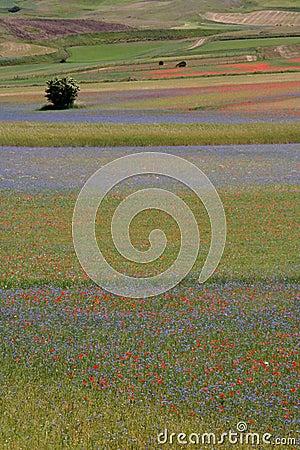 Castelluccio di Norcia / fields