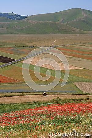 Castelluccio di Norcia / Poppies & coloured fields
