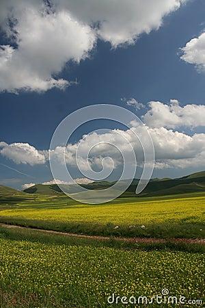 Castelluccio flowers landscape