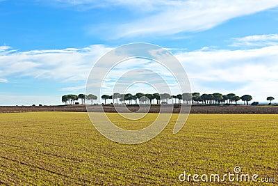 Castilla-La Mancha, Spain at winter