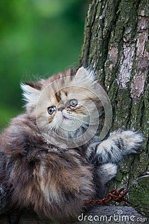 Free Cat Royalty Free Stock Photos - 10039378