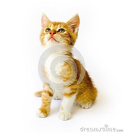Free Cat Royalty Free Stock Photo - 10857615