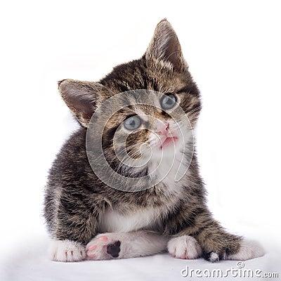 Free Cat Stock Photo - 1092150