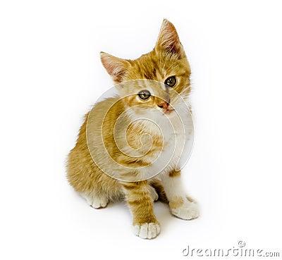 Free Cat Stock Photography - 11131412