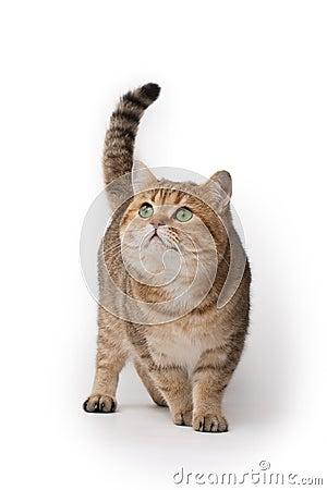Free Cat Royalty Free Stock Photos - 11335238