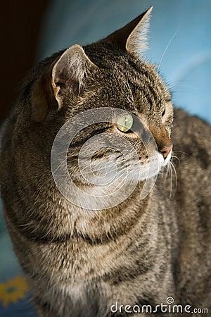 Free Cat Stock Image - 12786111