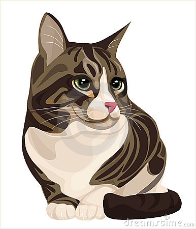 Free Cat Royalty Free Stock Image - 14139066